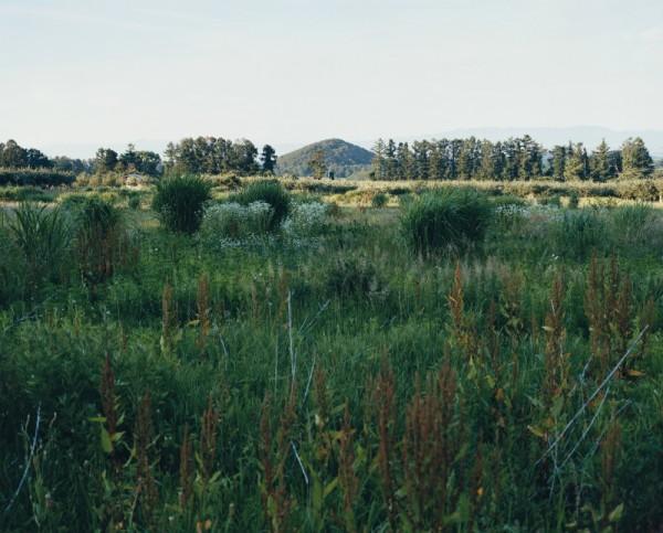 "Grassland Tears ""Omoriyama #1"""